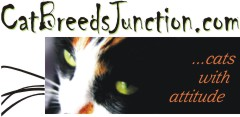 cat breed banner
